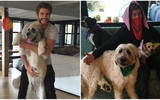 adopted_dogs3