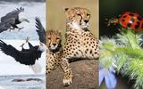 axn-beautiful_nature_documentaries-1600x900